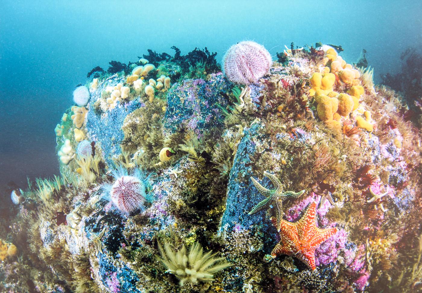 Scottish reef-Alan Cranston-2nd-.jpg