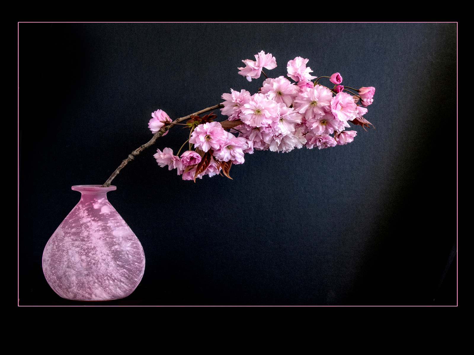 COLOUR - Cherry Blossom by Brian Hennessy (10 marks)