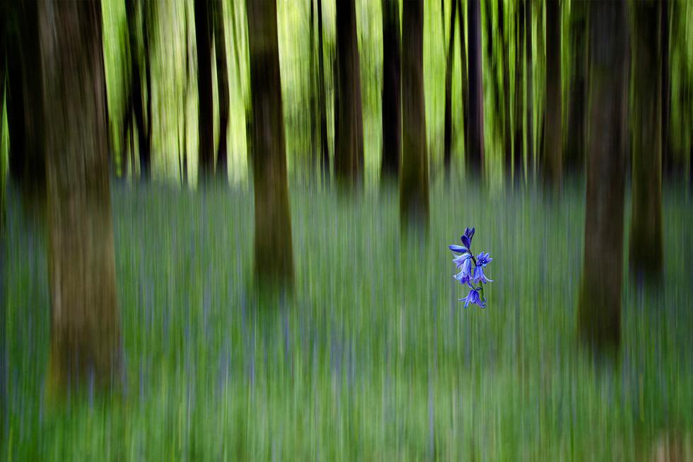 COLOUR - Learmount Forest by Mary Harkin (11 marks)
