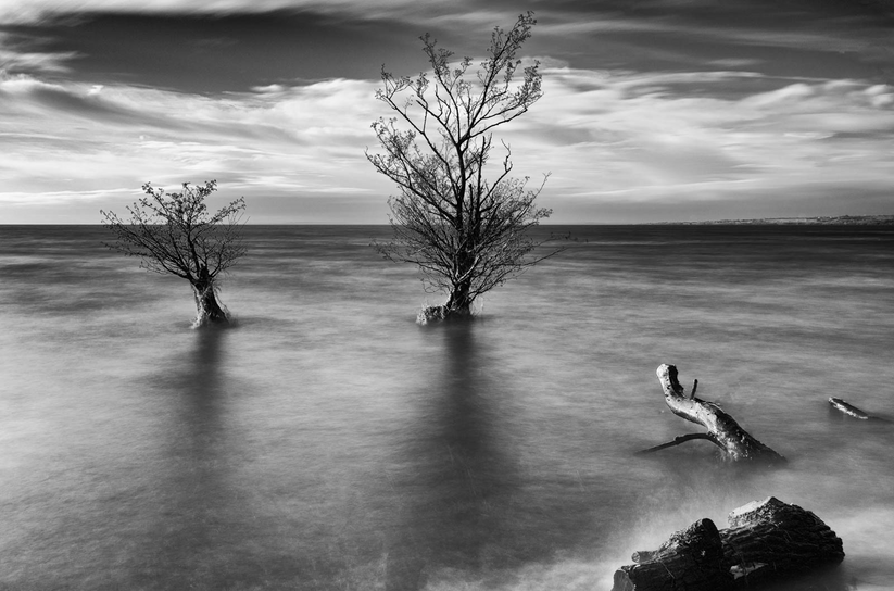 MONO - Two Trees by Mark Edgar (12 marks)