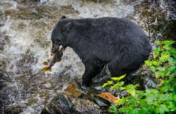 9_Top 10_Salmon_Fishing_Alaska_Style_Peter_Lennon_Catchlight_Camera_Club.jpg