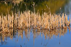 117 reeds.jpg