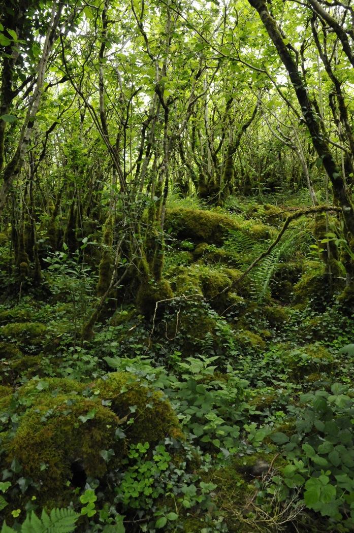 040 Burren_woodland.jpg