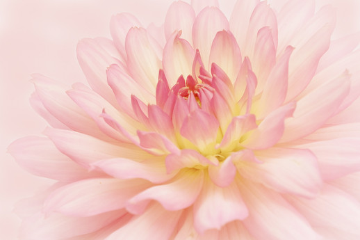 S-1-Pretty in Pink_LaurieCampbell_Catchlight.jpg