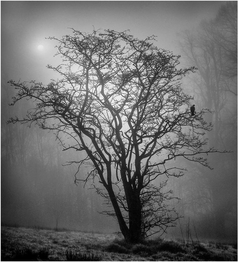 MONO - Bird on a Tree by Joel Fitzpatrick (10 marks)