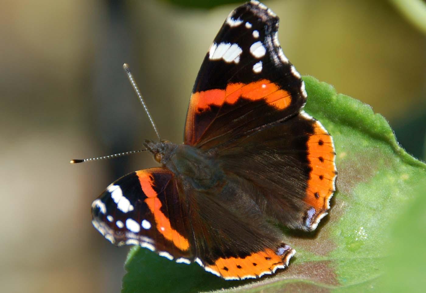 137 DOPK_Butterfly.JPG