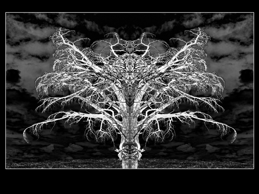 MONO - The Hidden Life of Trees - Peter Wohlleben by Brian Hennessy (9 marks)