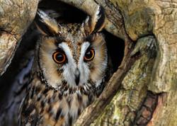 05_1314R1_120_063 C_ENSK_RoundNo.1_Bird Of Prey_Dave McDonald_N.jpg
