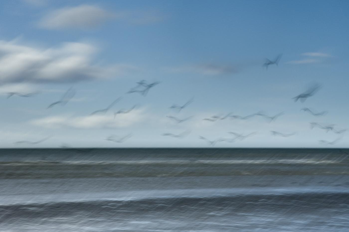 Birds-Michelle Brady-Enniskillen.jpg