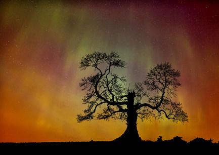 """""""Aurora Tree"""" by Joe Beattie"""