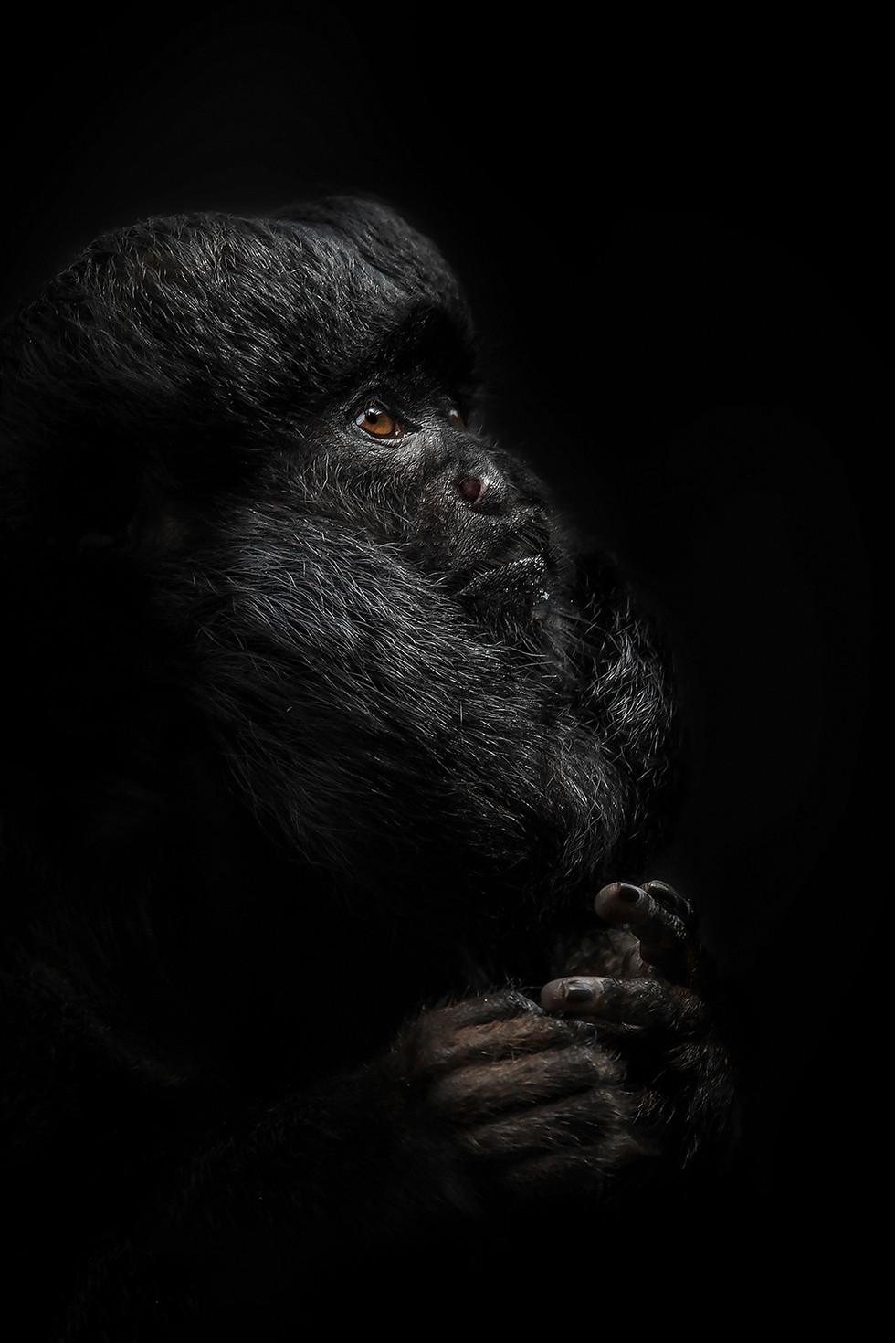 COLOUR - Guianan Bearded Saki by Pamela Wilson (13 marks)