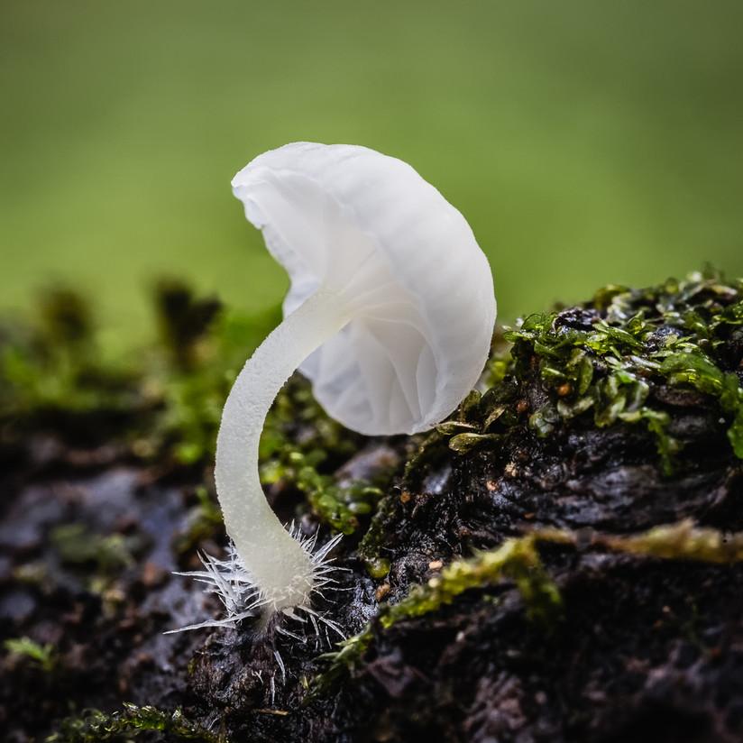 PDI - Fungi Macro by Vittorio Silvestri (11 marks)