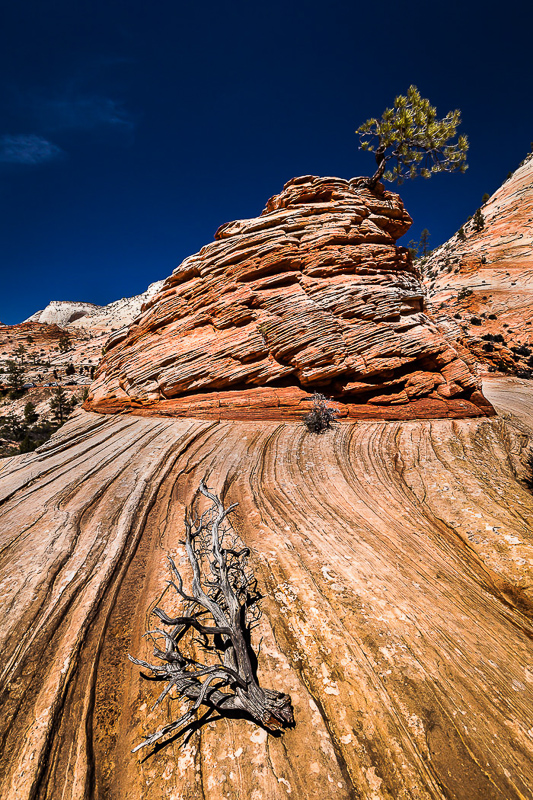 NIPA_15_TP_PDI_007-010_A_MNPC_2_Rock_Formation_and_Tree,_Zion_National_Park_Ian_