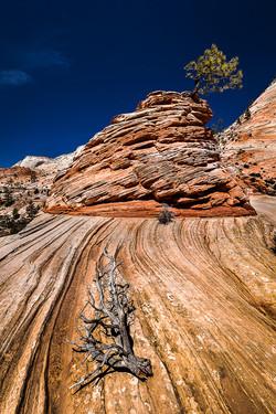 NIPA_15_TP_PDI_007-010_A_MNPC_2_Rock_Formation_and_Tree,_Zion_National_Park_Ian_