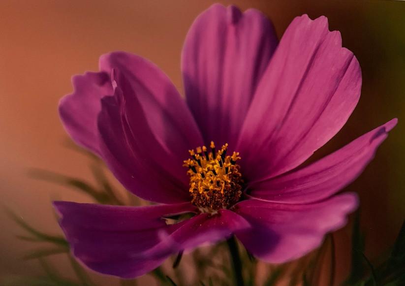COLOUR - Summer Beauty by Iris Rainey (8 marks)
