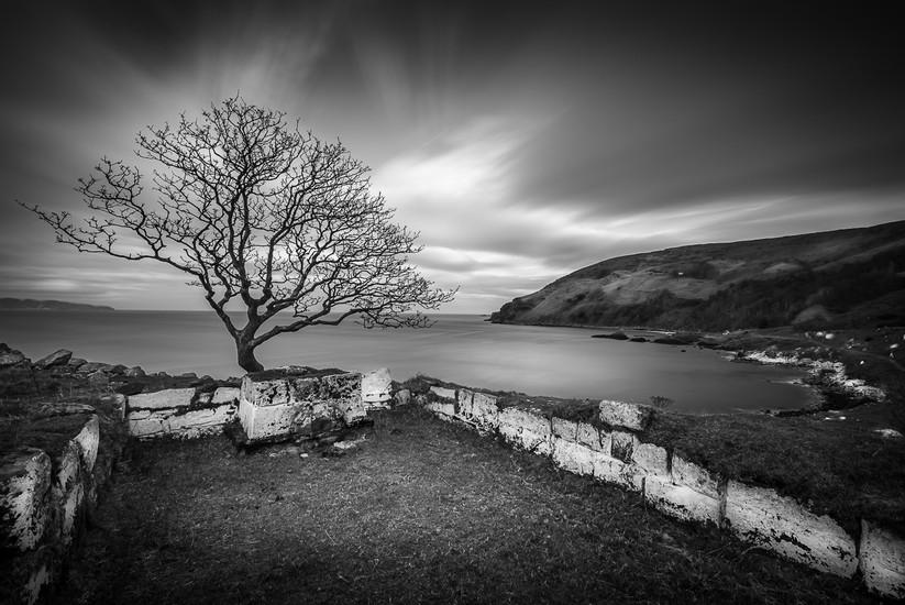 PDI - The Lonely Tree - Nicholas Halliday by Gareth O'Cathain (12 marks)