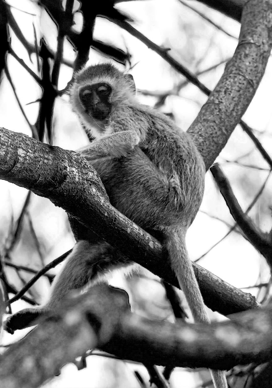 MONO - The Jungle Book - Rudyard Kipling by Seamus O'Neill (7 marks)