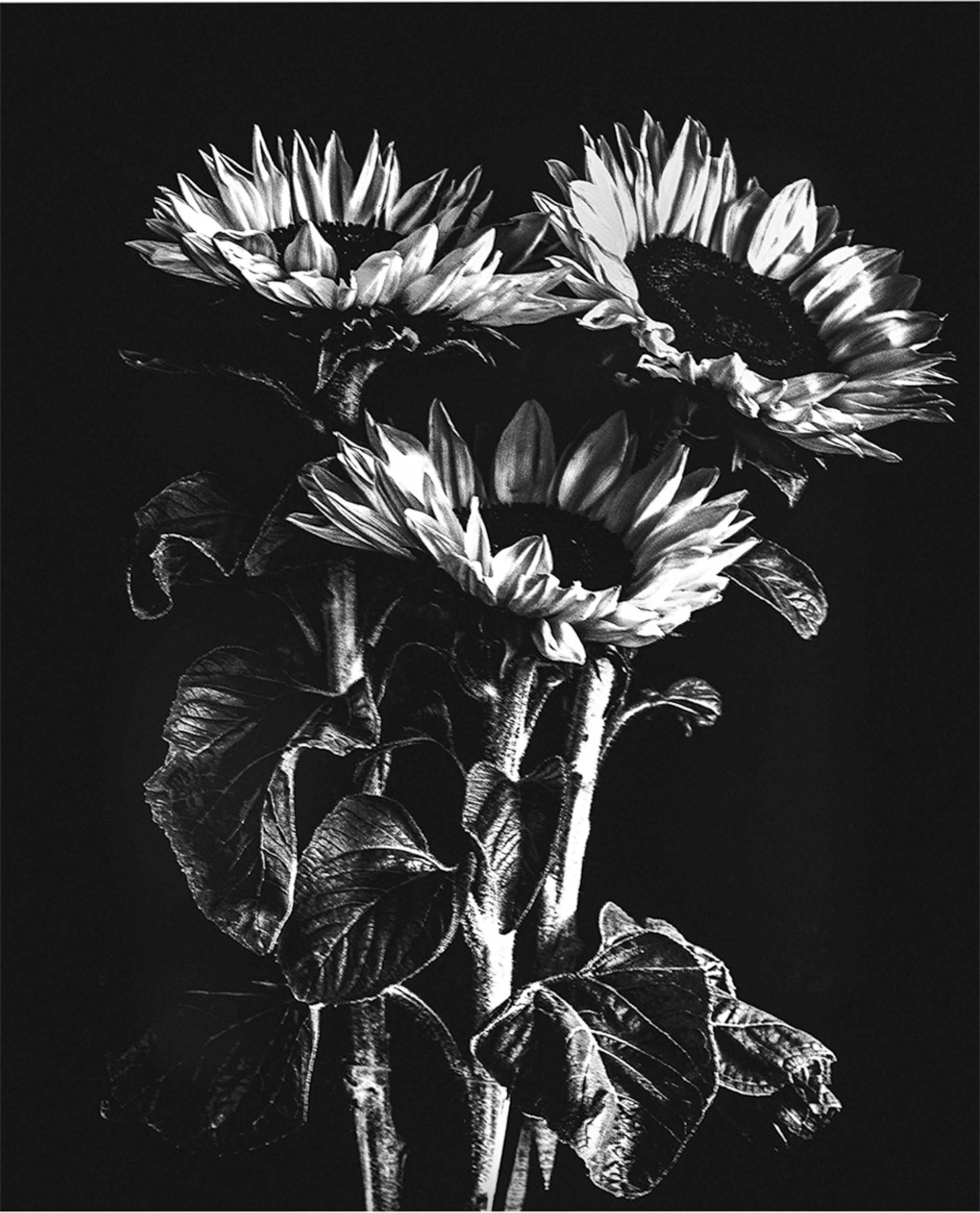 MONO - Sunflowers by Iris Rainey (8 marks)