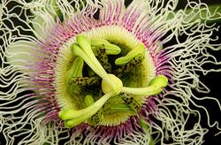 01_1314R1_125_071 C_NIEPS_1_south african flower_John McDonald.jpg