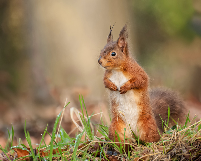 PDI - Squirrel in the Rain by Ted McKee (17 marks)
