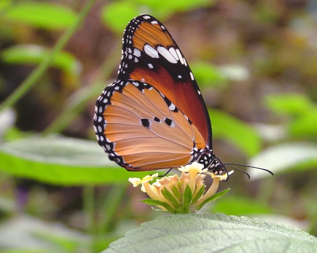 115 butterfly.jpg
