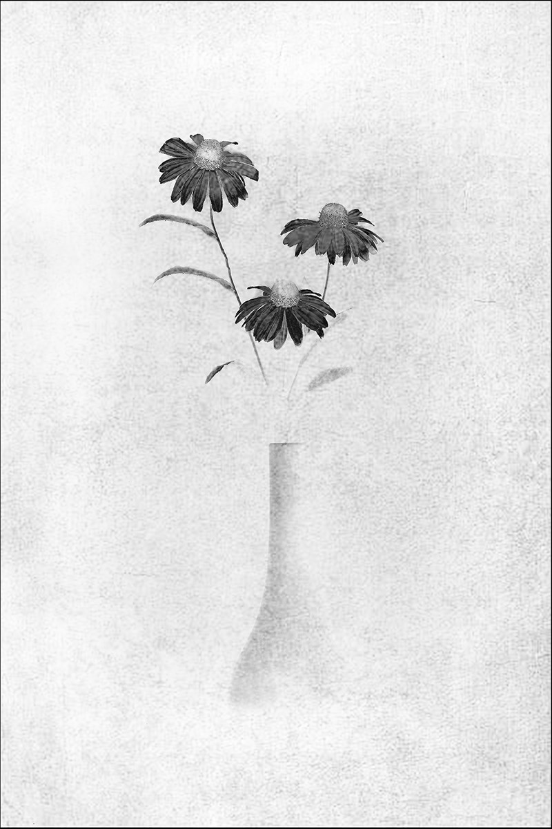 MONO - Black Flowers - Chris Isaak by Brian Curran (10 marks)