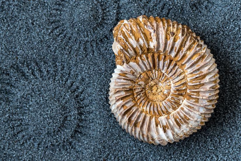 COLOUR - Ammonite by Beverley Stevenson (10 marks)