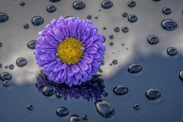 COLOUR - Purple Rain by John McCullough (9 marks)