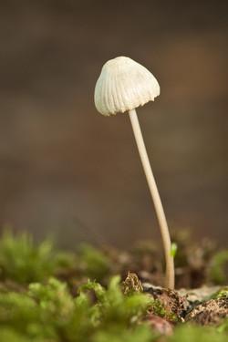 076 Fungi.jpg