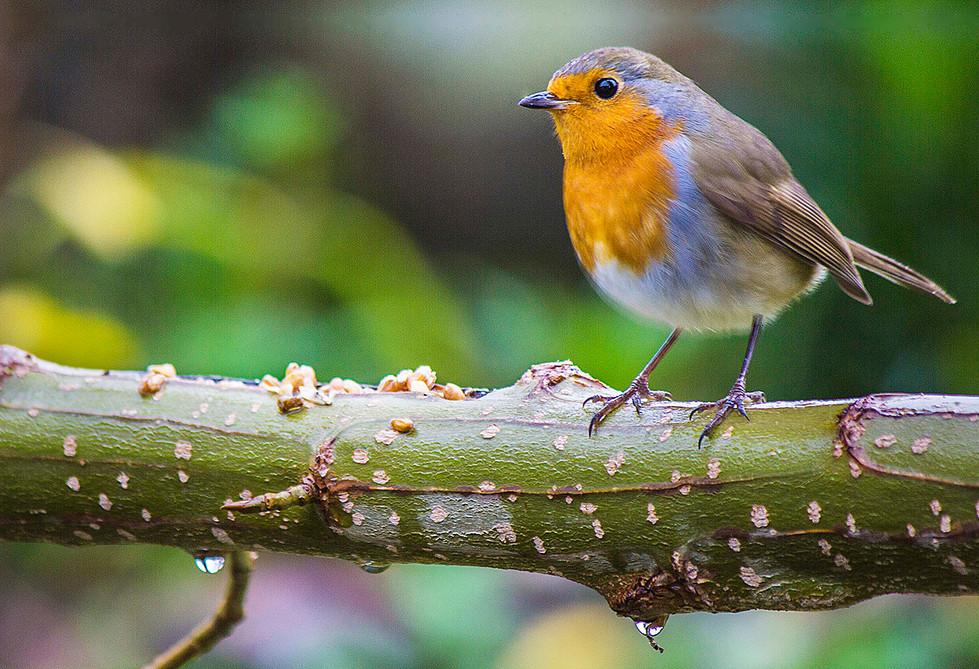 PDI - Winter Robin by B McGarrigle (9 marks)