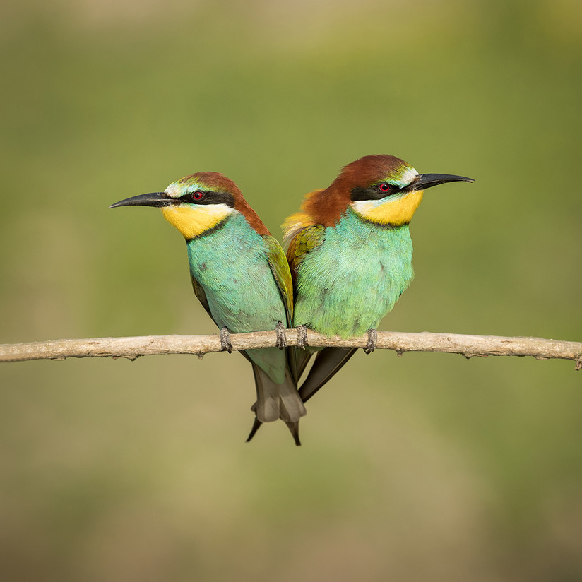 COLOUR - A Perfect Pair by Pamela Wilson (13 marks)