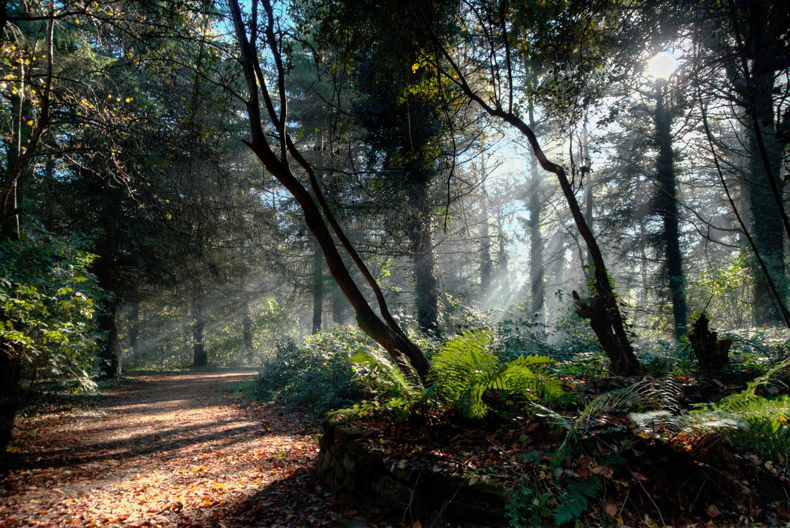 COLOUR - Woodland by Jonny Clark (8 marks)