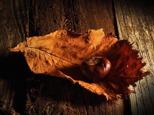 NIPA1617R3_PDI_068_PDI_C-_colin_gamble_-_fruits_of_autumn.jpg