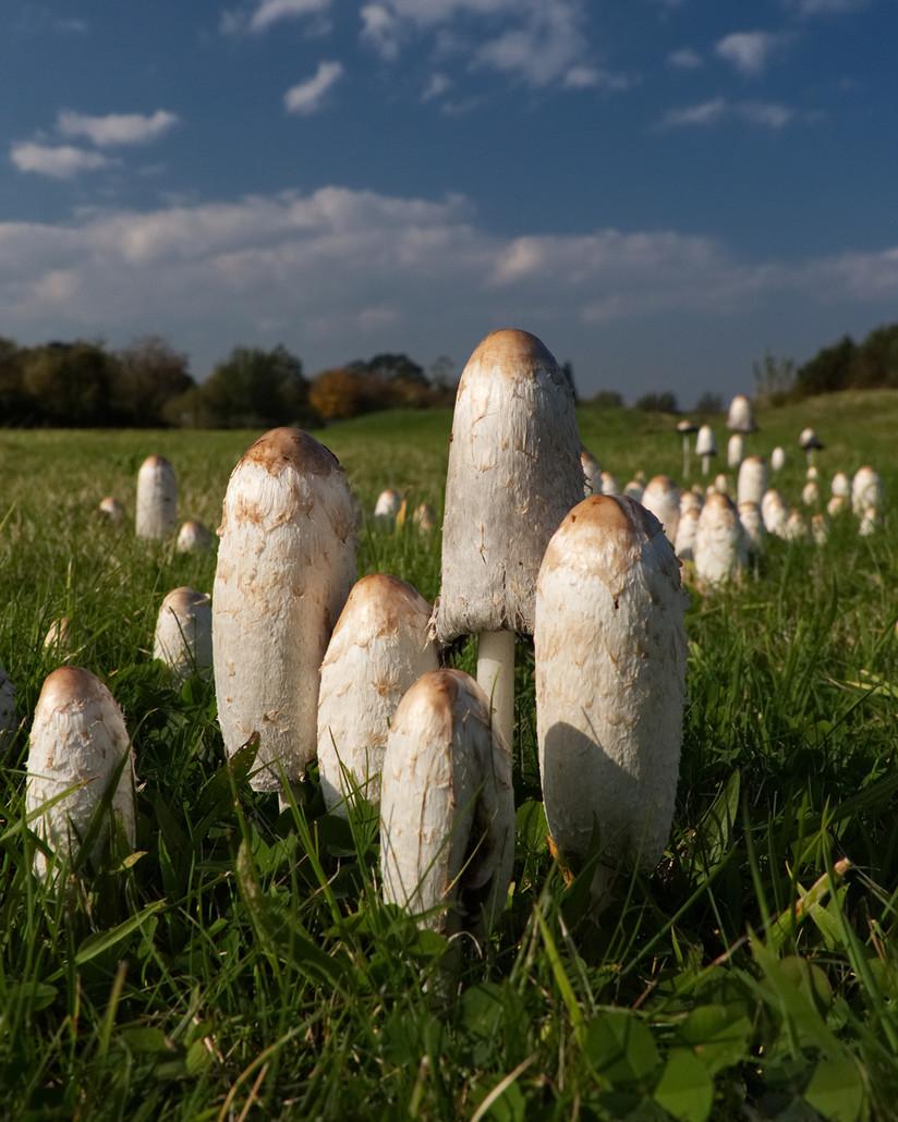 COLOUR - Meadow Fungi by Jonny Clark (9 marks)