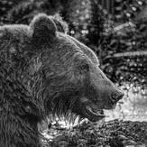 MONO - Brown Bear by Pamela Wilson (11 marks)