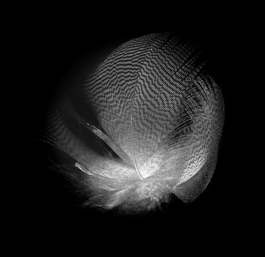 NIPA1617R3_PDI_023_A.Duck.R3.As_Light_as_A_Feather.Dympna__Heagney.jpg