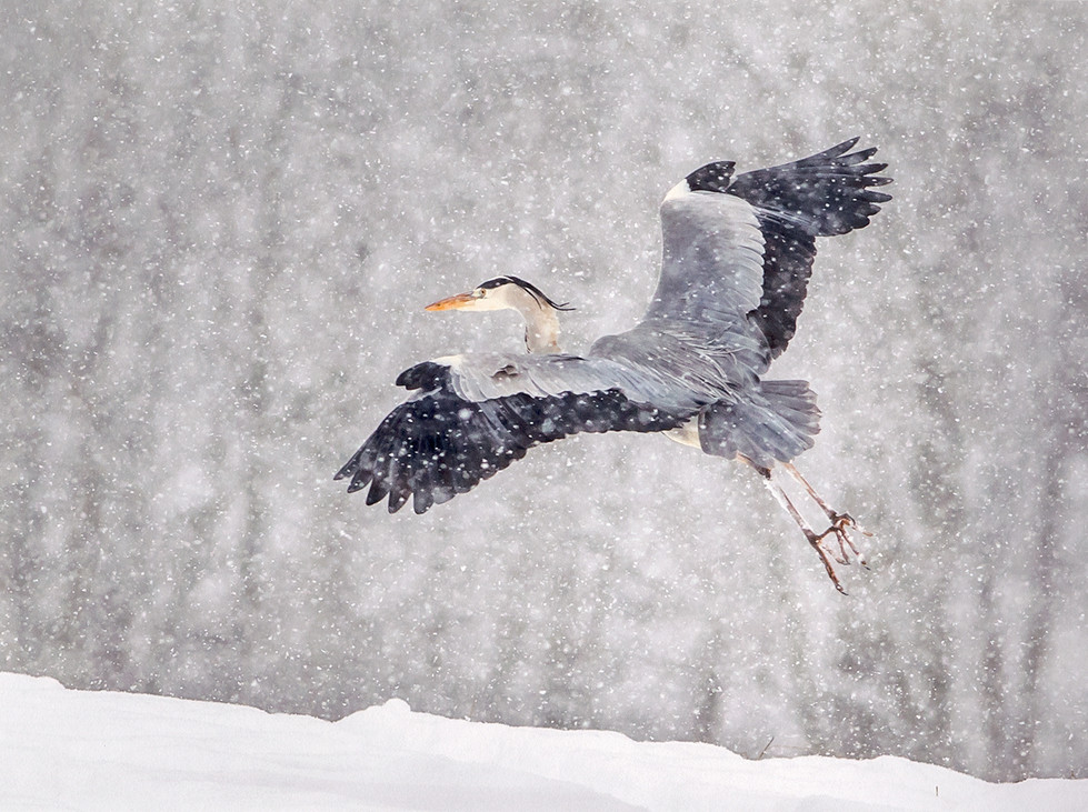 COLOUR - Snowy Landing by Ken Lindsay (16 marks)