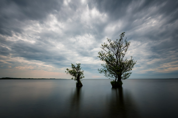 """Lough Neagh Trees"" by Darren Brown"