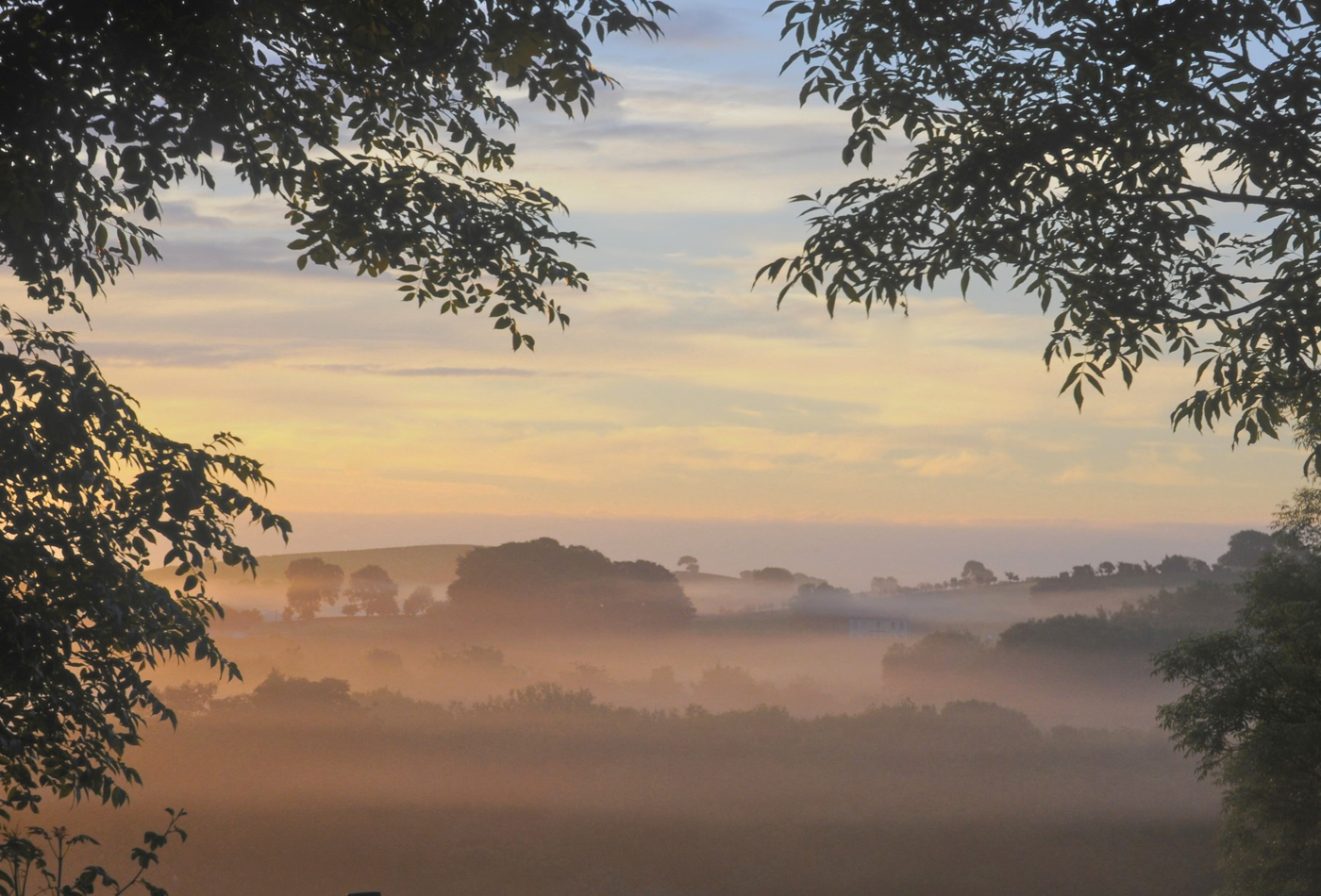 146 Dopk_Morning Mist.jpg