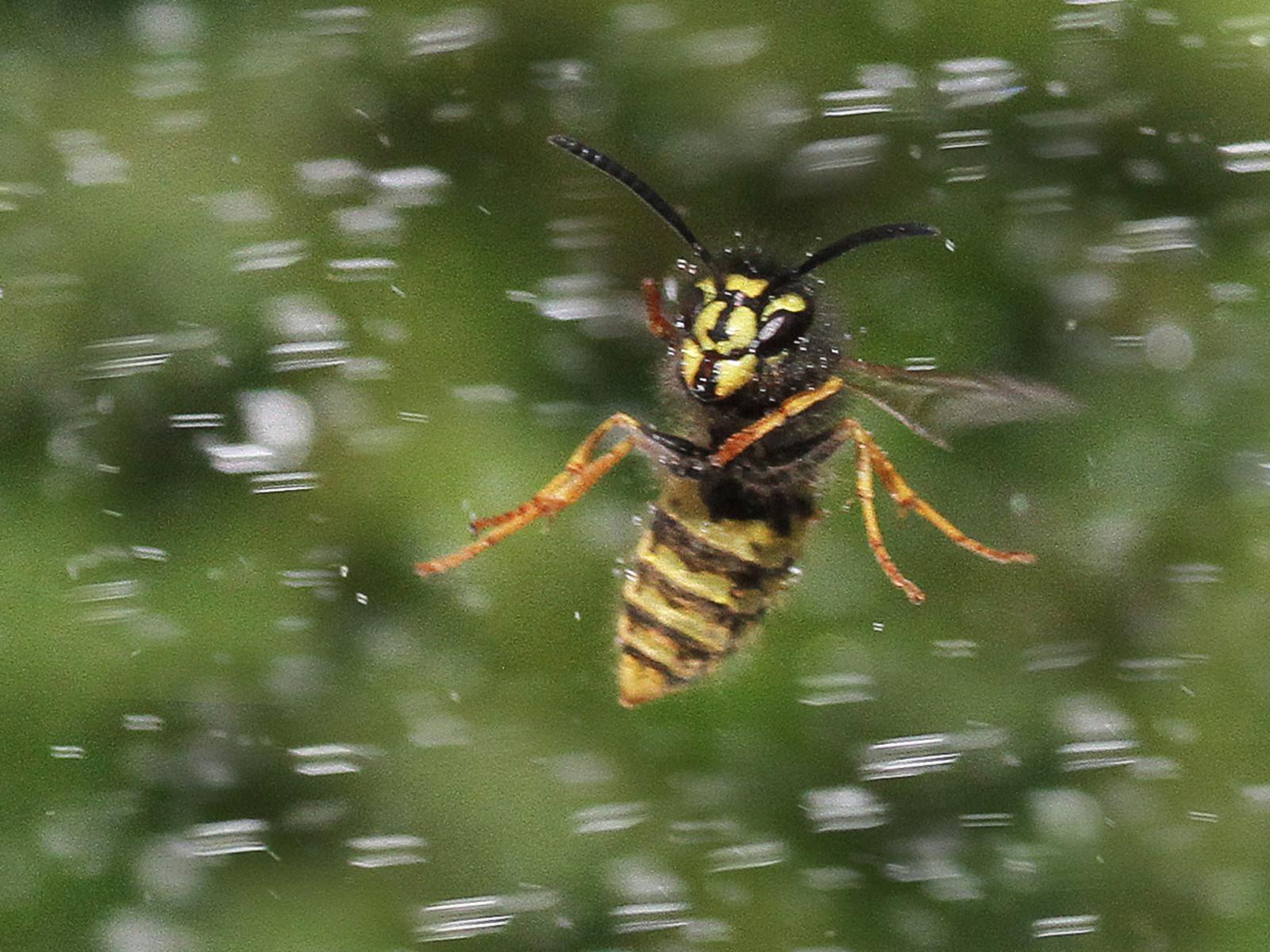 PDI - Wasp in storm by Brian McKenna (7.5 marks)