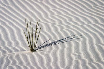 NIPA1617R3_PDI_058_C_MNPC_3_Natural_Textures_&_Shadows,_White_Sands_National_Monument_Ian_Lyons.jpg