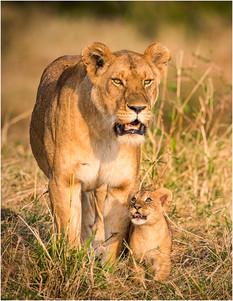 S-1-Mother and Cub_Brendan Hinds_CBPPUCC.jpg