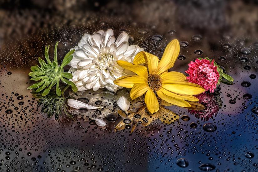 COLOUR - Damp Petals by John McCullough (10 marks)