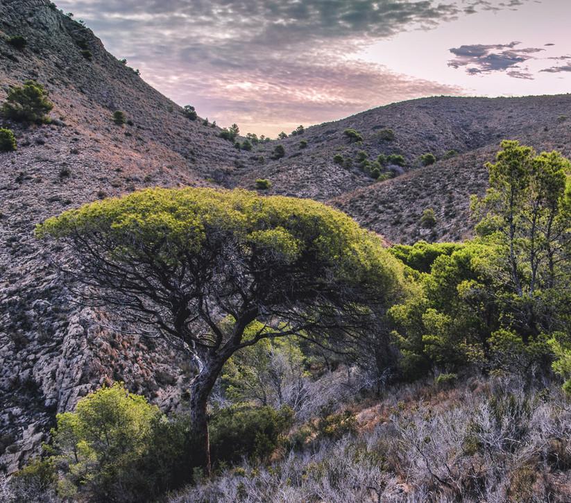 PDI - Dawn Light by Iris Rainey (9 marks)