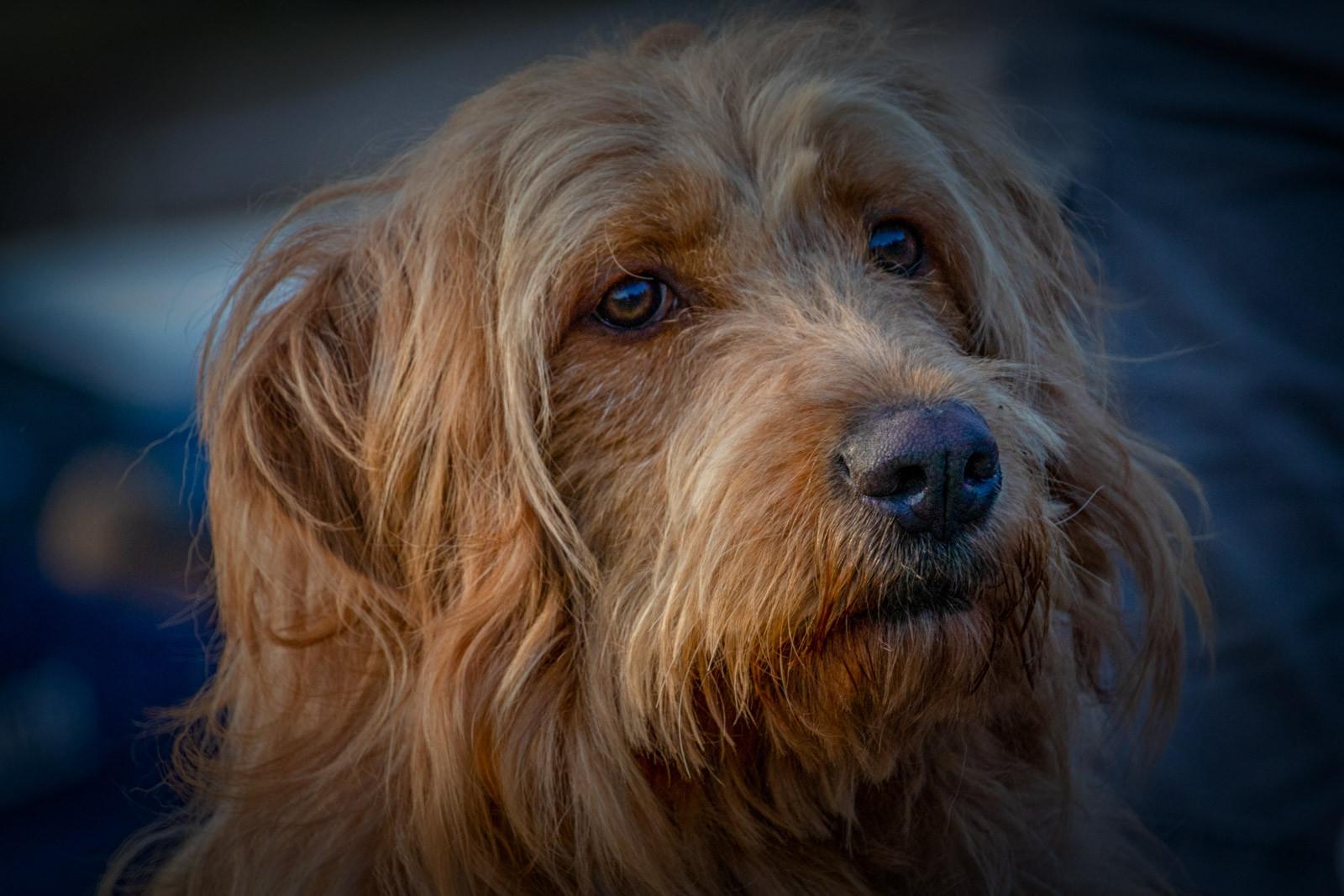 COLOUR - Shaggy Dog by Iris Rainey (9 marks)