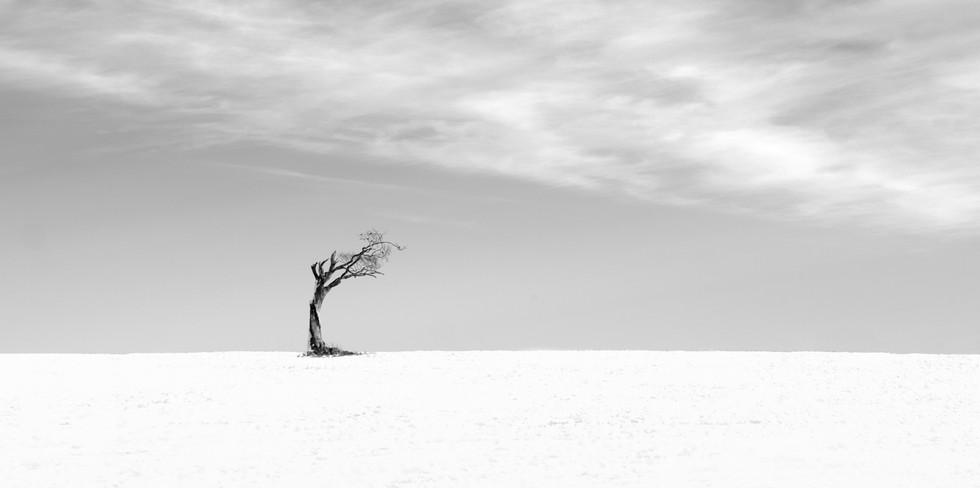 MONO - Rhianna Tree by Hugh Rooney (13 marks)