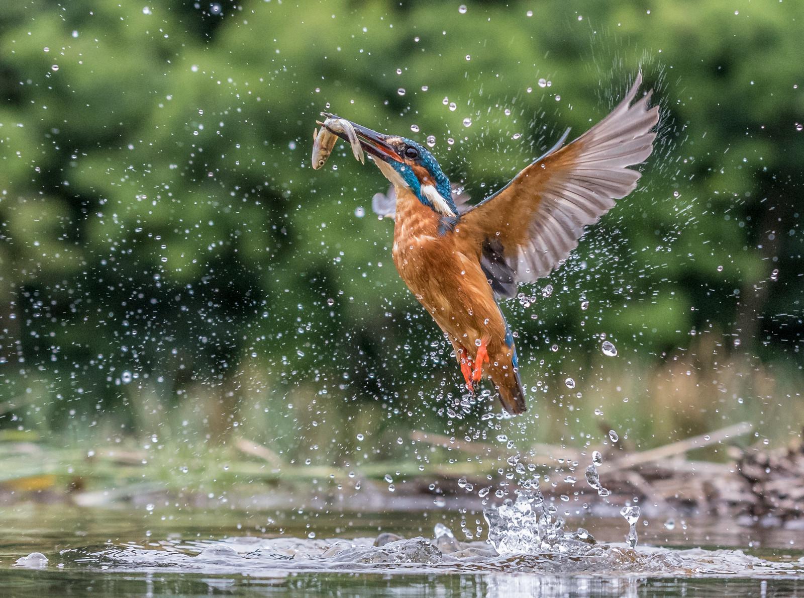 PDI - Kingfishing by Terry Hanna (13 marks)
