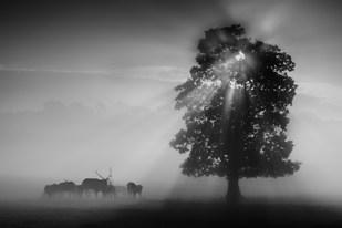 """""""Deer in the Mist"""" by Robert Sergeant"""