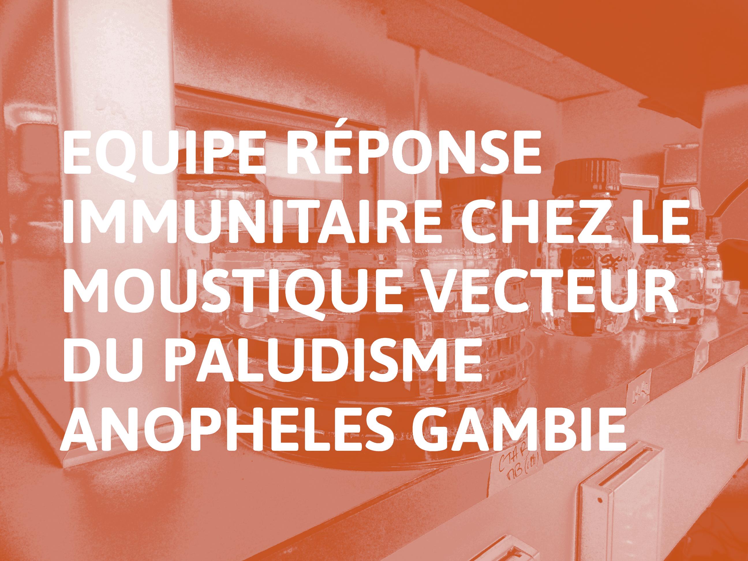 EquipeRéponse_immunitaire_chez_le_moustiquevecteur_du_paludisme_Anopheles_gambie