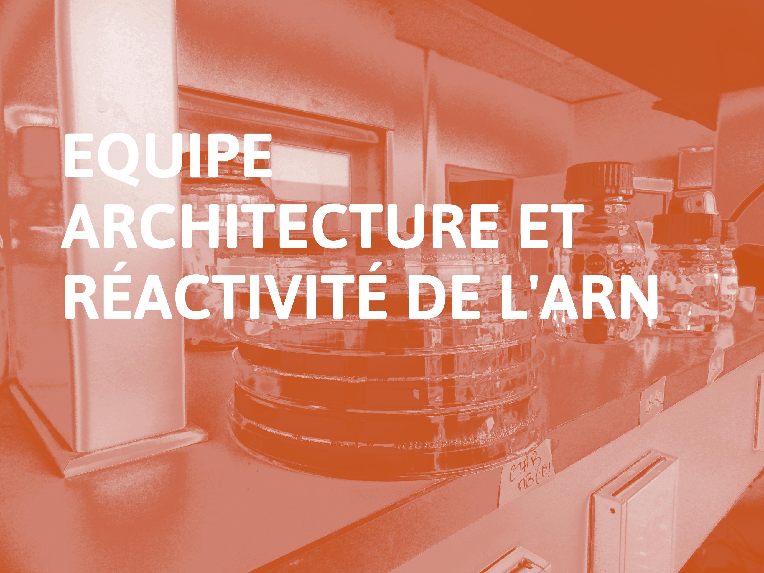 Equipe_Architecture_et_Réactivité_de_l'ARN
